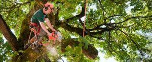 Orlando Tree Service